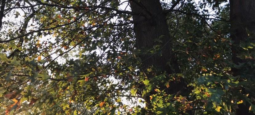 If it were the falling leavesalone